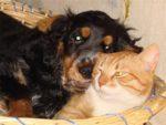 Правила содержания кошек и собак в забайкальском крае