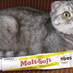 Как правильно вычесывать кошку по шерсти или против