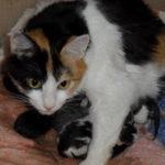 Что делать если у кошки слабая родовая деятельность