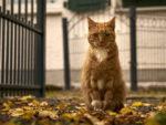 У кошки на хвосте жирная шерсть и коричневые пятна