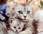 Эффективное средство против блох и клещей для кошек