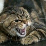 Сколько стоит прививка от бешенства кошке в архангельске