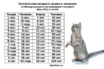 Как определять сколько лет кошкам по человеческим меркам