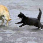 Что у кошки одна у крокодила две а у медведя ни одной