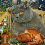 Сколько сухого корма в день нужно взрослой кошке в день