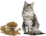 Норма сухого корма для котенка мейн куна