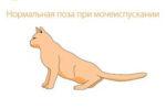 Сколько раз в день ходит в туалет котенок мейн кун