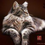 Породы кошек мейн кун в калининграде