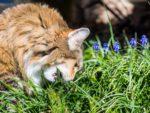 Витамины для котят мейн кунов при натуральном кормлении