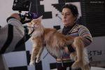 Фестиваль кошек мейн кун лофт проект