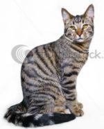 Что можно давать котенку мейн куна