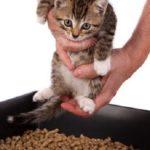 Сколько раз должен ходить в туалет котенок мейн кун