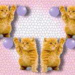 Как дать таблетку кошке целиком или лучше раздробить